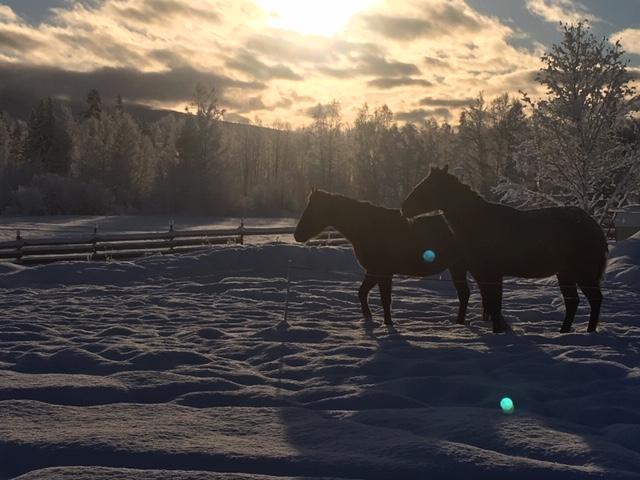 horses and orbs.JPG
